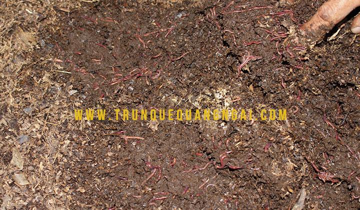 phân trùn quế tại quảng ngãi