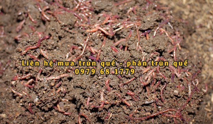 trun-que-quang-ngai